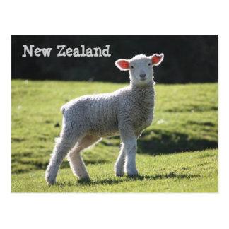 Cartão Postal Nova Zelândia - cordeiro adorável que olha o