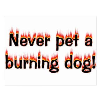 Cartão Postal Nunca pet um cão ardente!