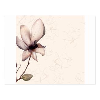 Cartão Postal O abstrato floresce a semente morna das cores