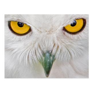 Cartão Postal o amarelo eyes a coruja