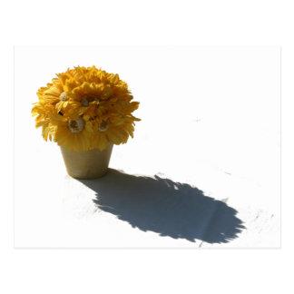 Cartão Postal O amarelo floresce o balde e a sombra brancos