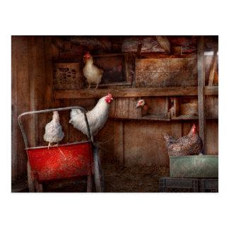 Cartão Postal O animal - galinha - o pato é um espião