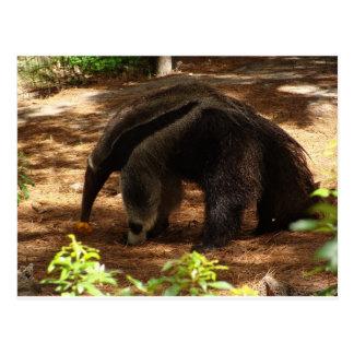 Cartão Postal O Anteater