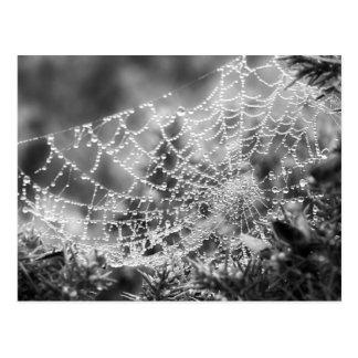 Cartão Postal O artista da natureza - a Web de aranha -