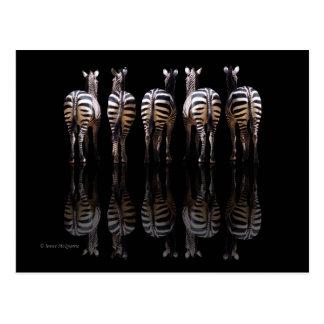 Cartão Postal O branco preto da zebra listra reflexões
