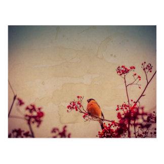 Cartão Postal O Bullfinch em Rowan Textured