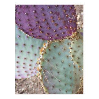 Cartão Postal O cacto maravilhoso natural da beleza… colore…