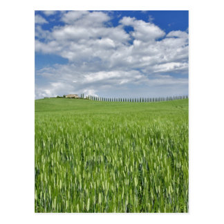 Cartão Postal O campo e a movimentação de trigo alinharam pelo
