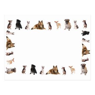 Cartão Postal O cão diferente produz em seguido