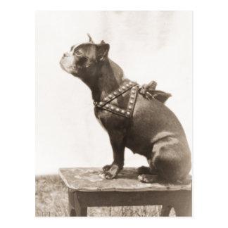 Cartão Postal O cão senta-se para uma imagem