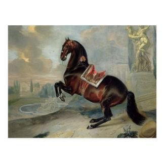 Cartão Postal O cavalo de baía escuro 'Valido