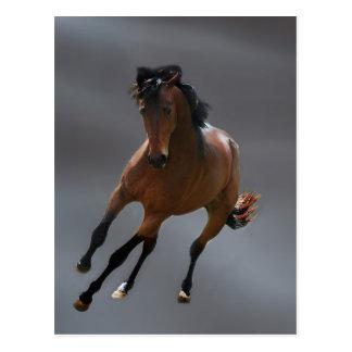 Cartão Postal O cavalo do vaqueiro chamou Riboking