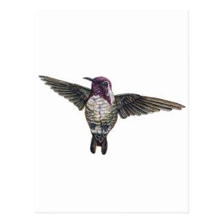 Cartão Postal O colibri da costela