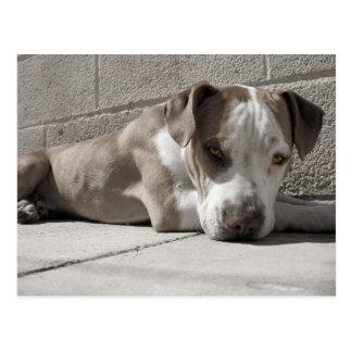 Cartão Postal o coração de um cão de Bullie