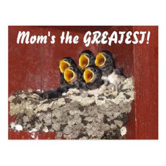 Cartão Postal O coro do pássaro canta o dia das mães feliz à