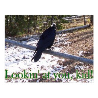 Cartão Postal O corvo de Hungy