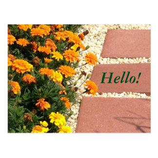 Cartão Postal O cravo-de-defunto amarelo alaranjado floresce