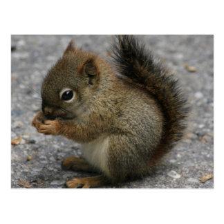 Cartão Postal O esquilo minúsculo mordisca na comida nas patas