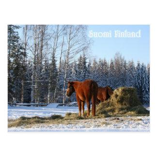 Cartão Postal O feno é para cavalos