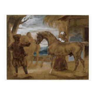 Cartão Postal O garanhão árabe conduziu por dois Arabians para