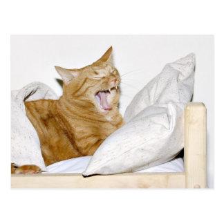 Cartão Postal O gato deia manhãs
