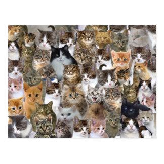 Cartão Postal O gato do gatinho enfrenta o teste padrão