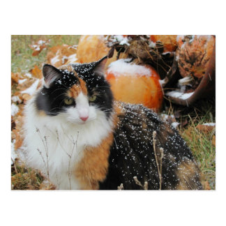 Cartão Postal O gato nevado pensa que o inverno está vindo