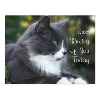 Cartão Postal O gato que pensa de você carda ou toda a ocasião