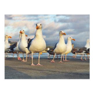 Cartão Postal O grupo da gaivota