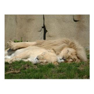 Cartão Postal O leão dorme hoje à noite em seus braços