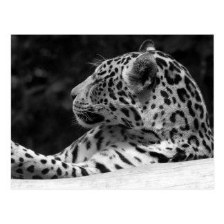 """Cartão Postal """"O leopardo do acordo """""""