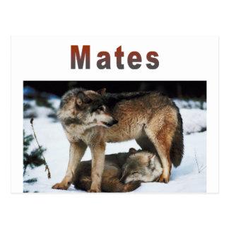 Cartão Postal O lobo acopla a linha