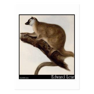 Cartão Postal O Macauco vermelho de Edward Lear (Lemur vermelho)