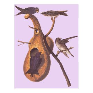 Cartão Postal O Martin roxo de Audubon