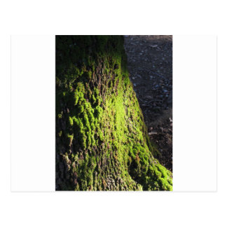 Cartão Postal O musgo verde no detalhe da natureza de musgo
