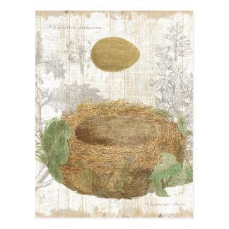 Cartão Postal O ninho de um pássaro com um ovo de Brown
