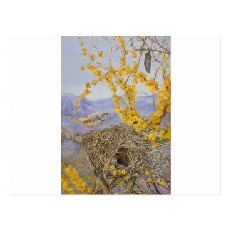 Cartão Postal O ninho do pássaro armado na acácia Bush, o Chile