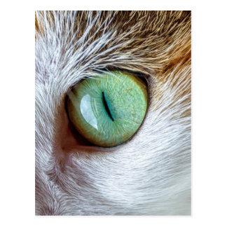 Cartão Postal O olho de gato verde bonito de fascinação