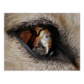 Cartão Postal O olho do lobo