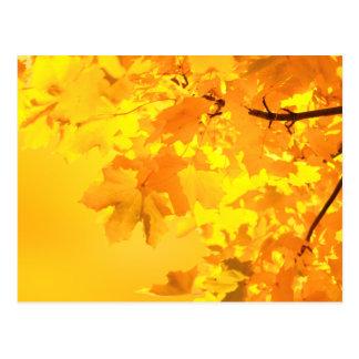 Cartão Postal O ouro do outono
