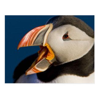 Cartão Postal O papagaio-do-mar atlântico, uma ave marinho