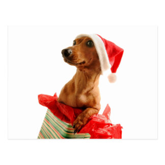 Cartão Postal O papai noel do Dachshund - cão do papai noel -