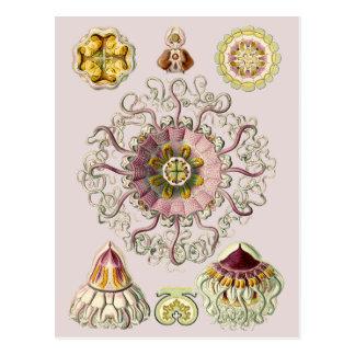 Cartão Postal O Peromedusae de Ernst Haeckel