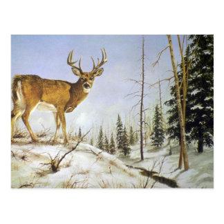Cartão Postal O pico de Jay, cervo da cauda branca