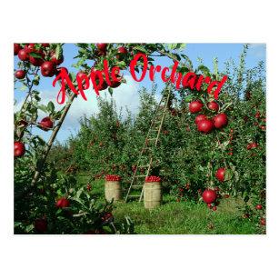 Cartão Postal O pomar de Apple