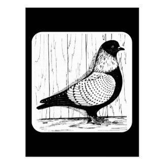 Cartão Postal O pombo de Starling Prata-atou 1979