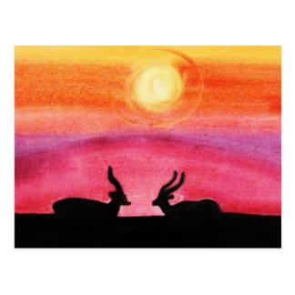 Cartão Postal O por do sol das gazelas @ (arte de Kimberly