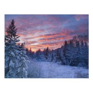 Cartão Postal O por do sol vívido pinta o céu acima de invernal