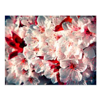 Cartão Postal O primavera está aqui - as flores da maçã
