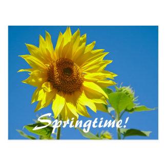 Cartão Postal O primavera está aqui! - Girassóis da primavera